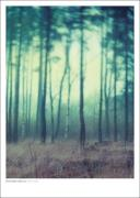 Poster Fairyland   70x100 cm